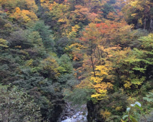 V字峡谷と祖母谷川と紅葉