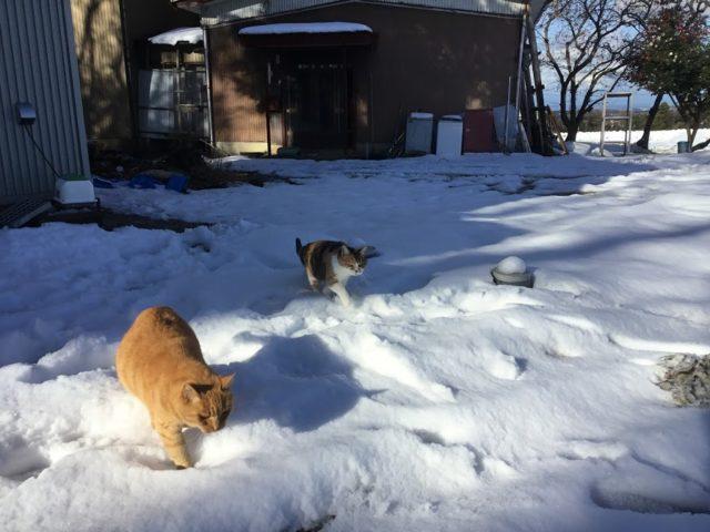 里山の雪(前沢地域)