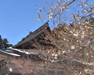 梅の花と法福寺