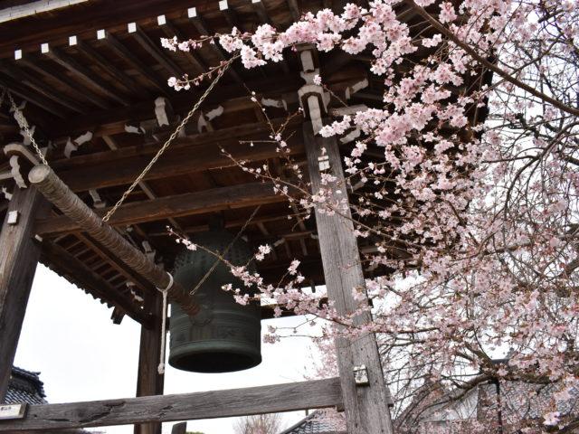 西徳寺の四季桜と梵鐘