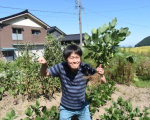 ぷくぷく枝豆収穫♪