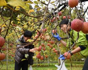 りんご園で♪