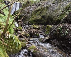 岩場の小川