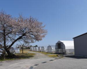 桜も咲いてほっこり