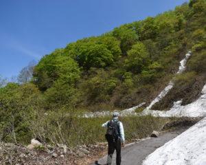 新緑と青空と雪