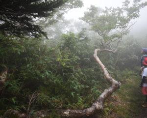この木のど根性がすごい