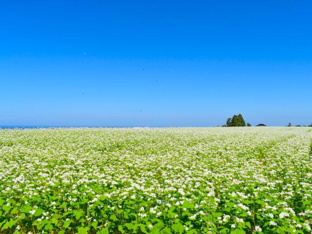空と海と白い花